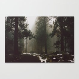 Enchanted Forest Canvas Print