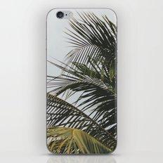 palm treee iPhone & iPod Skin