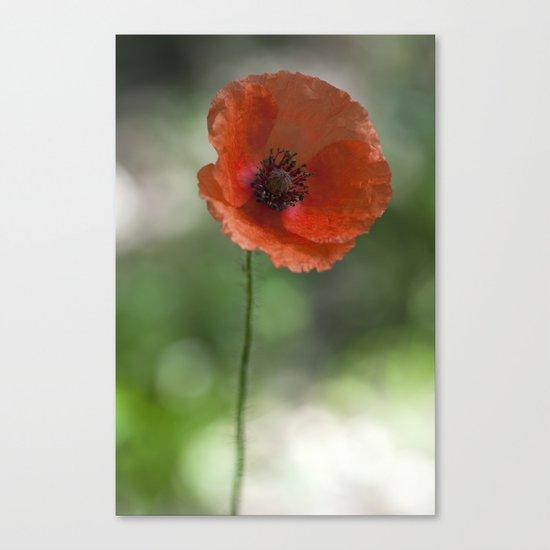 Poppy at backlight 1 Canvas Print