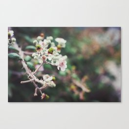 Rubus Canvas Print