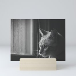 Sammy the Siamese Mini Art Print