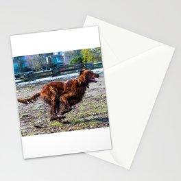 Irish Setter running full gallop Stationery Cards