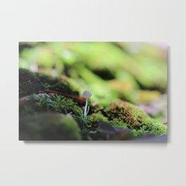 Bonsai Fungi Metal Print