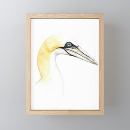 Northern gannet Framed Mini Art Print