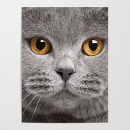 Cat in Grey Poster