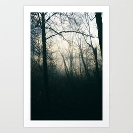 Fog and Branches Art Print
