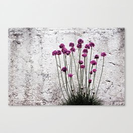 Urban garden. Purple flowers. Canvas Print