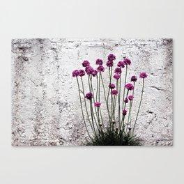 Urban garden. Purple flowers. Canvas Print