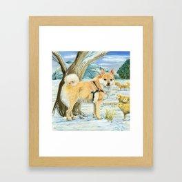 Norwegian Buhund Working Framed Art Print