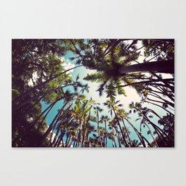 Many Palms. Canvas Print