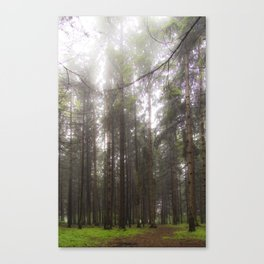 Morning walk in the forest Canvas Print
