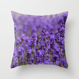 the smell of lavender -c- Throw Pillow