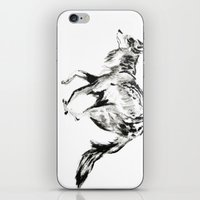 coyote iPhone & iPod Skins featuring COYOTE by ShelbyTaylor