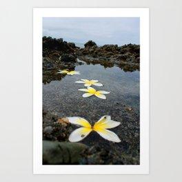 Laguna Petals Art Print