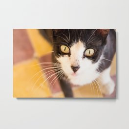 Desert Cat Metal Print