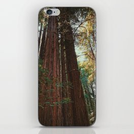 Redwood Trees iPhone Skin