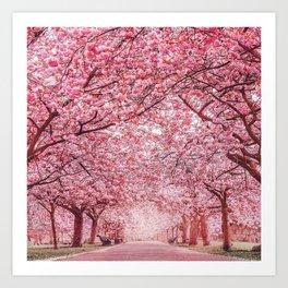 Cherry Blossom in Greenwich Park Art Print