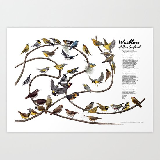 Warblers of New England Art Print