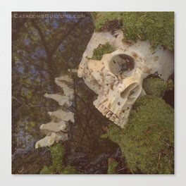 Catacomb Culture - Human Skull in Creek Canvas Print