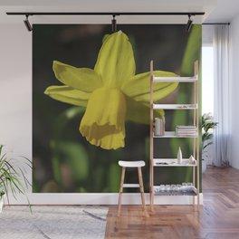 Golden Daffodil Wall Mural