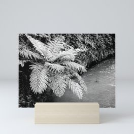 Ferns Mini Art Print