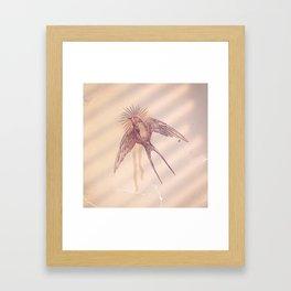 little swallow Framed Art Print
