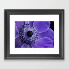 Purple Anemone Framed Art Print
