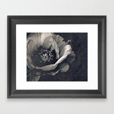 canvas peony Framed Art Print