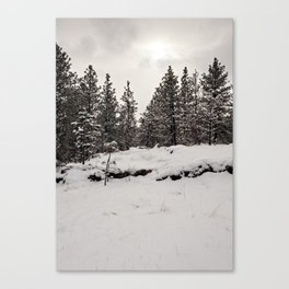 trees in the snow Canvas Print