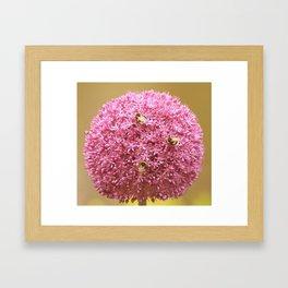 three bumblebees Framed Art Print