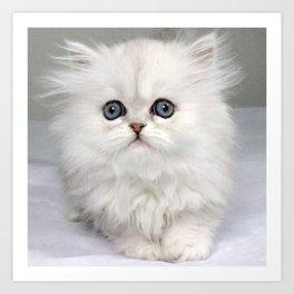 White Kitty Cat Art Print