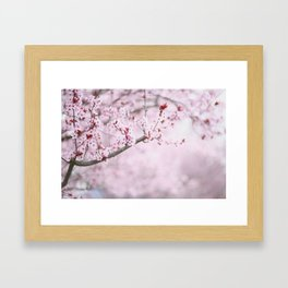 Cherry Blossoms in Grants Pass Framed Art Print