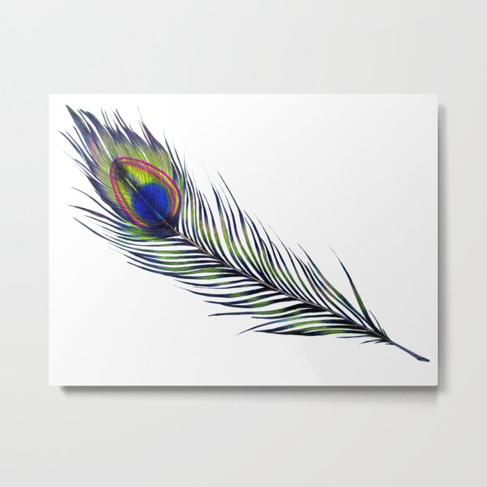The Peacock's Feather Metal Print