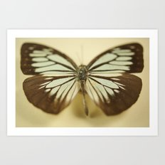 Butterfly Effect Art Print
