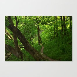 Woods II Canvas Print