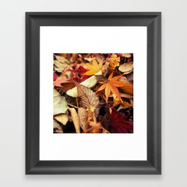 Indian Summer - Colorful Autumn Leaves Framed Art Print