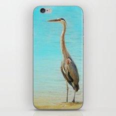 Wading - Blue Heron - Wildlife iPhone & iPod Skin