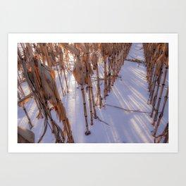 Frozen Corn Art Print