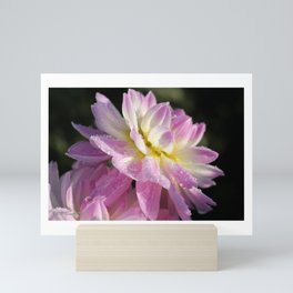 Frosted Dahlia named Sandia Melody Mini Art Print