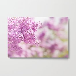 Lilac vibrant pink inflorescence shrub Metal Print