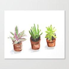 3 Potted Plants Canvas Print