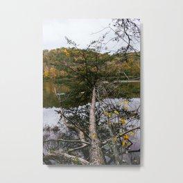 Lake Vesuvius fallen tree, Wayne National Forest, Oh, 2014 Metal Print