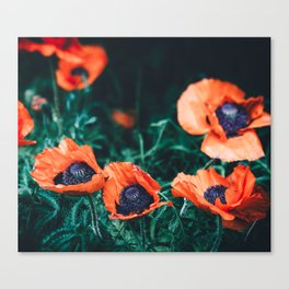Wild Poppy Flowers Canvas Print