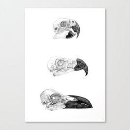 Bird Skulls - Pencil Canvas Print