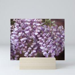 Spring - Wisteria Mini Art Print