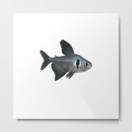 Black Phantom Tetra Aquarium Fish Metal Print