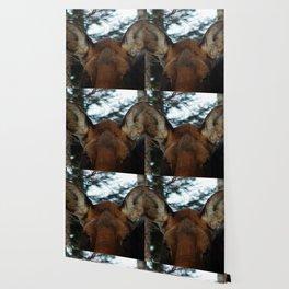 Moose Ears Wallpaper