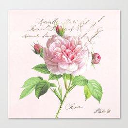 Paris Rose Canvas Print