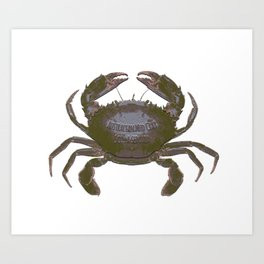 Mud Crab Scylla serrata by Chrissy Wild Art Print