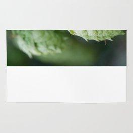 Humulus lupulus, the Common Hop Rug